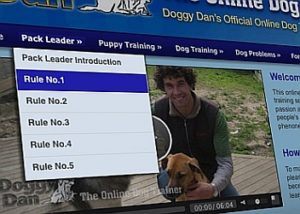 the online Dog trainer program review