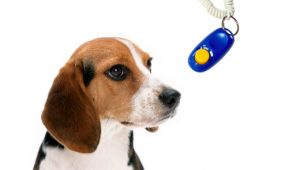 clicker-training-doggy-dan