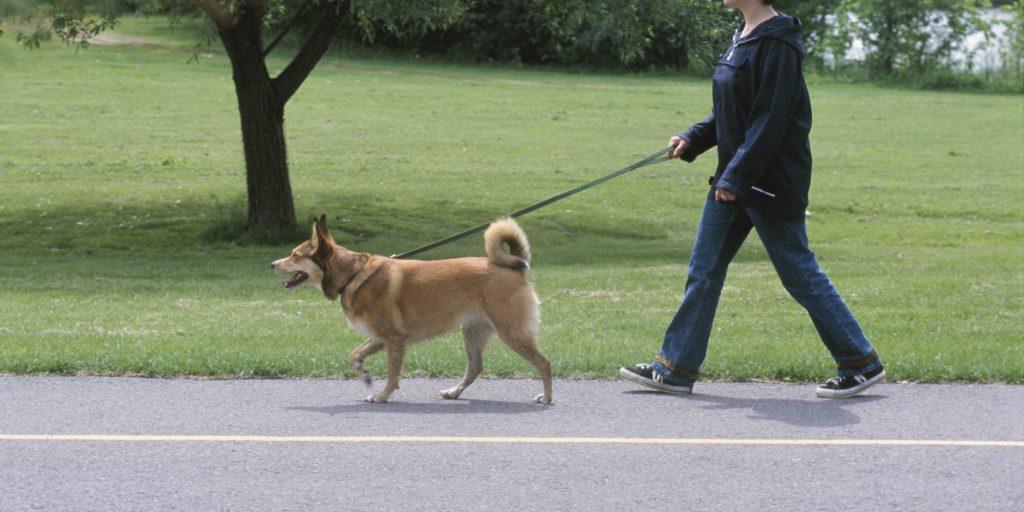 dog walking doggy dan