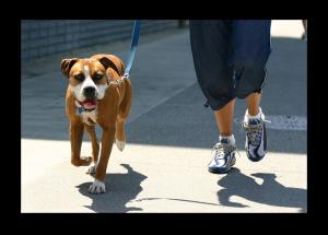 dog-walking-doggy-dan