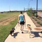 loose-leash-walk-doggy-dan